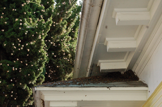 Bee Swarm above Roof